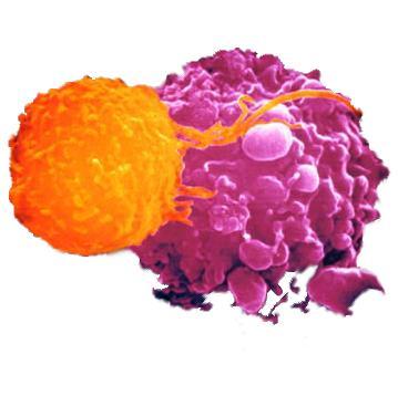 Candida albicans у женщин, детей, мужчин: лечение