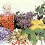 Растения вместо лекарств