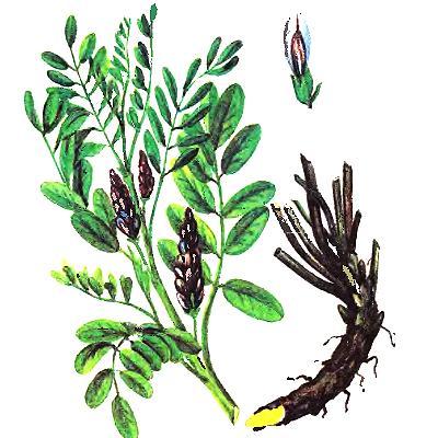 Степные растения