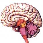 Пора тренировать мозги