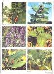 Осторожно: ядовитые растения