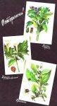 Запомните «портреты» ядовитых растений
