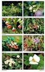 Ягодки-цветочки