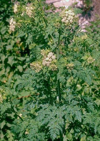 от паразитов натуральными растительными средствами