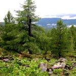 Как лечиться лесом