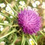 Растения против гепатита