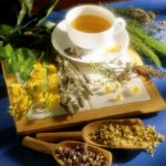 Лечебные растения в жизни человека