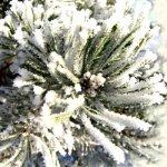 Зимние заготовки лекарственных растений