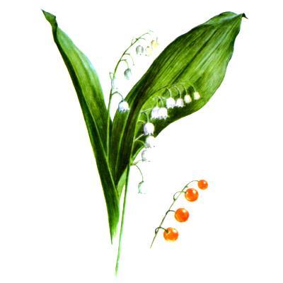 крапива фото цветы