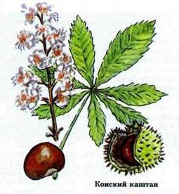 Лекарственные растения применяемые