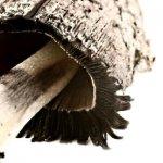 Фунготерапия – исцеление грибами