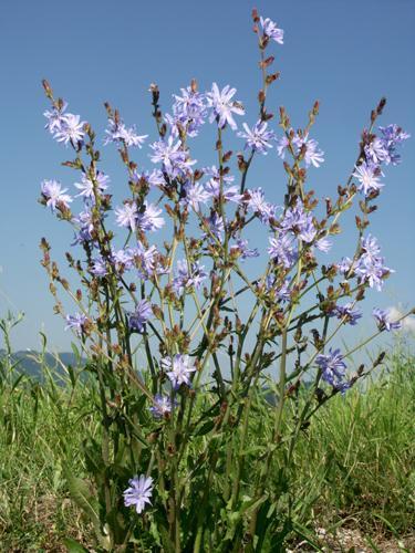 травы против аллергии