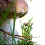 Рак. Профилактика и лечение грибами