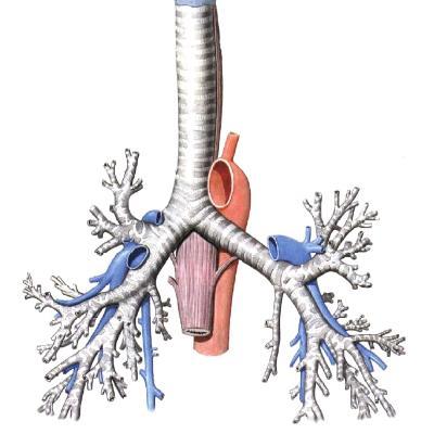 хронический верхнечелюстной синусит запах изо рта