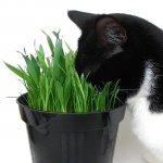 Лекарственные травы для кошек