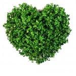 Лекарственные сборы трав сердечно-сосудистого действия