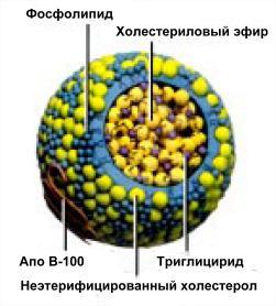 Препараты от атеросклероза нижних конечностей